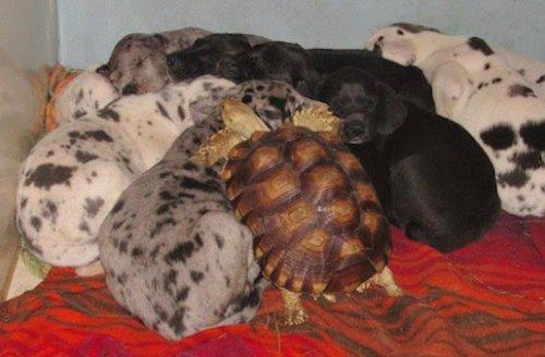 tortoise-dogs